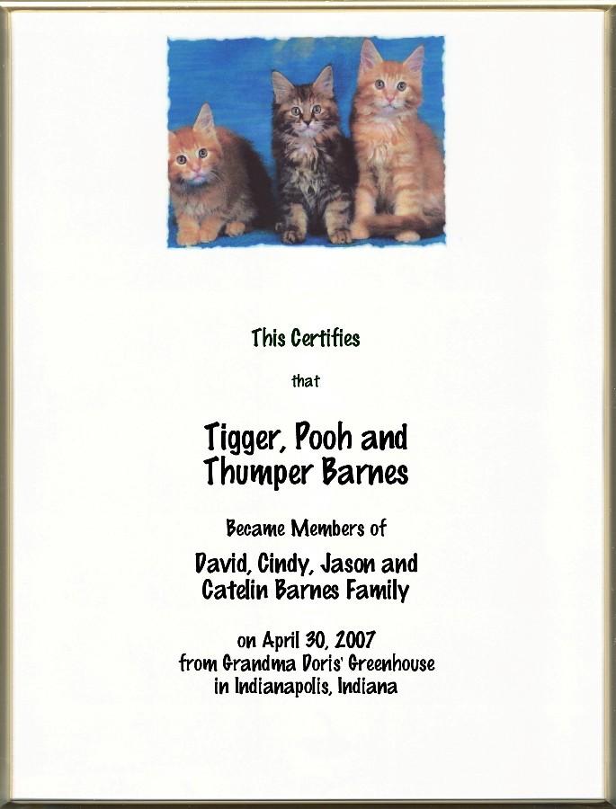 Pg Cat Adoption